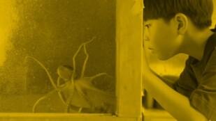 Mały chłopiec spogląda przez szybę na ośmiornicę
