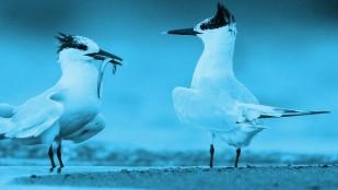 Fotos do filmu Ptasi raj