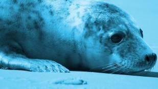 Fotos do filmu Ssaki morskich fal