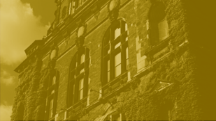 kadr z filmu kręć wrocław autorstwa piotra załubskiego, przedstawia ścianę muzeum narodowego we wrocławiu porośniętą bluszczem